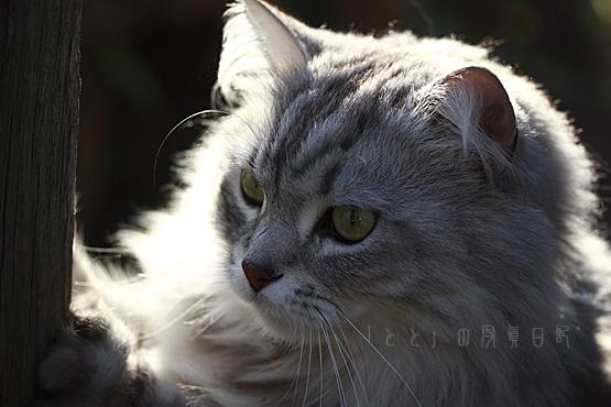 プライド猫