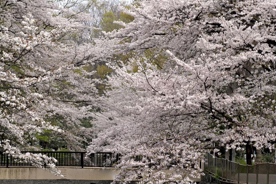和田堀公園01