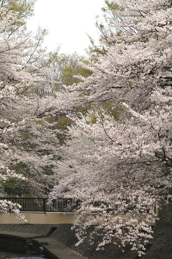 和田堀公園02