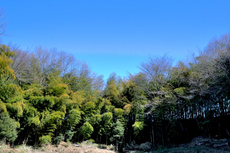 早野の竹林01