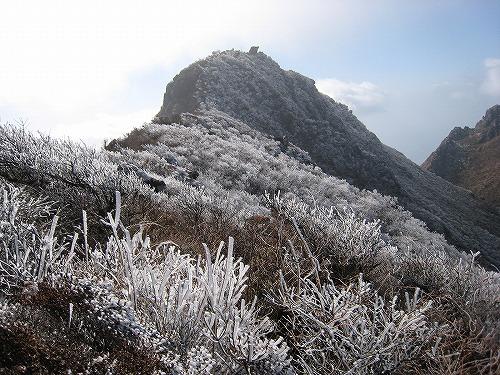 由布岳霧氷H21.2 019