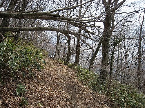 111ブナ林の縦走路