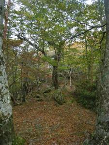 2009-10-11-025.jpg