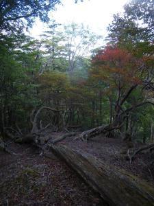 2009-10-11-033.jpg