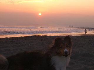 夕日がきれいざますよ。