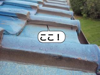 20090622_171229.jpg