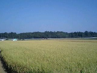 inekari2009