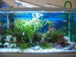 海藻水槽写真