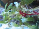 海藻トゲトゲ