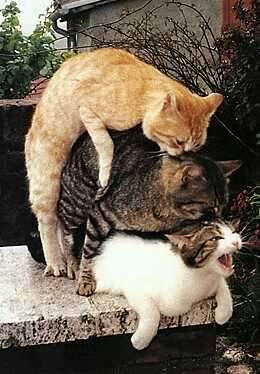 http://blog-imgs-41.fc2.com/y/a/t/yattodetaman/20080824065706.jpg