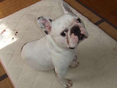 2008_0911モー子0007