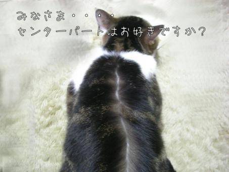 081105.jpg
