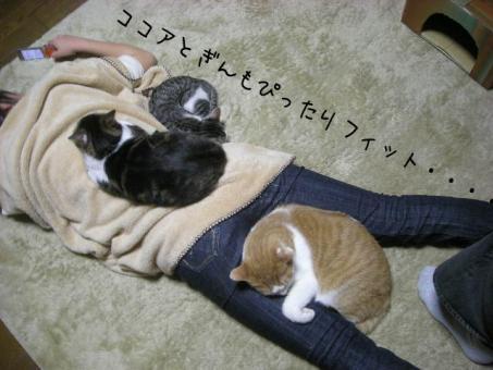 このベッド 動かないから好き・・・・・ココア
