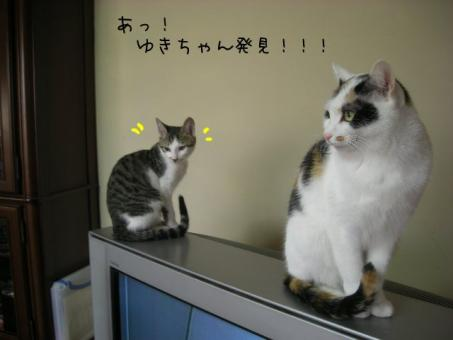 nekoyamaさん 顔が怖い・・・・