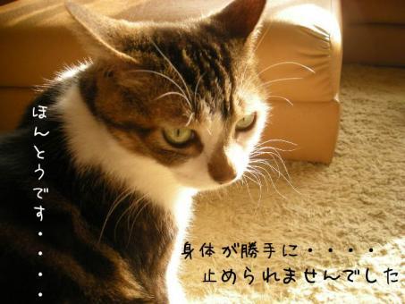 ココアちゃん目つきが悪い( ̄Д ̄;;