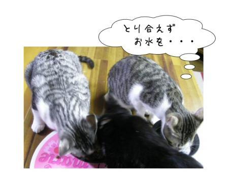 なんて 可愛そうな ゆきちゃん(T_T)