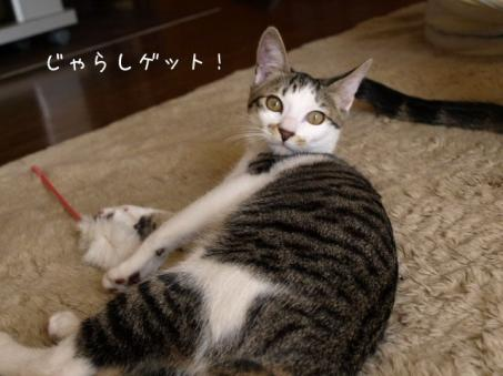 nekoyamaさんチョロイ チョロイ