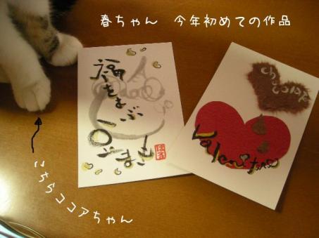 必ず来る猫・・・ココちゃん(*´∇`*)