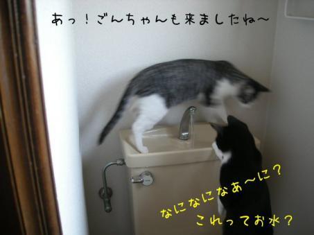 あぁ~~~~ごんちゃんまで(;_;)