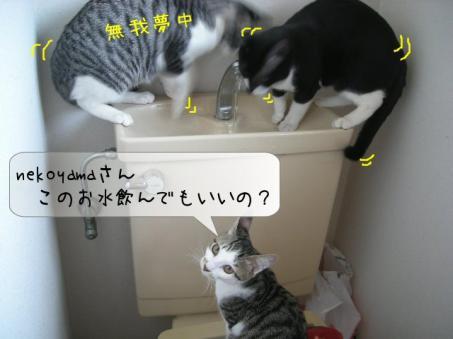おぉ~~っとゆきちゃん登場(・・;)