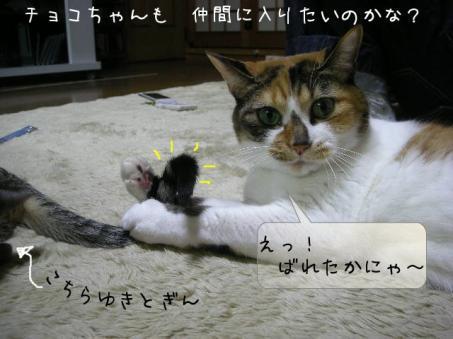 素直なチョコちゃん可愛いよ♪