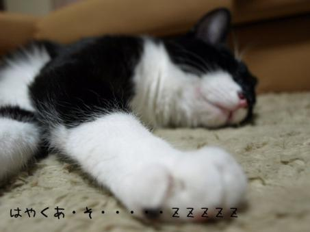あれれれれ~寝ちゃった・・・・(*´∇`*)