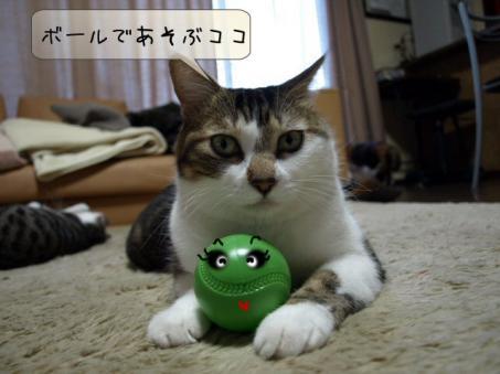 ボールちゃん今度は頑張って(*^-^)