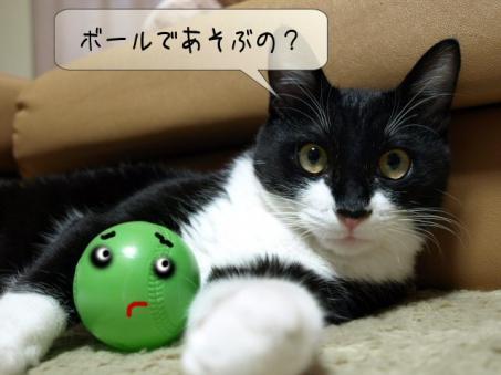 ごんちゃんボールちゃんが嫌い?