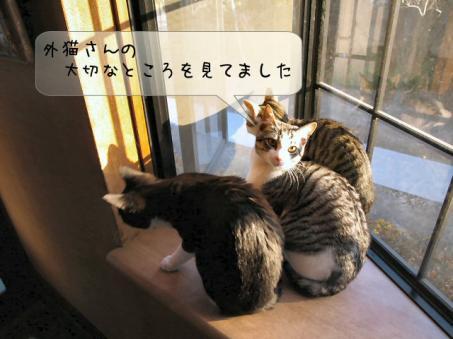 あっ!ほんとだ外猫しろちゃんだ(=゜-゜)ノニャーン♪