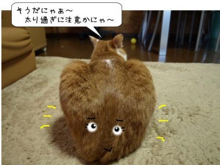 大きなお尻だにゃ~(^▽^;)