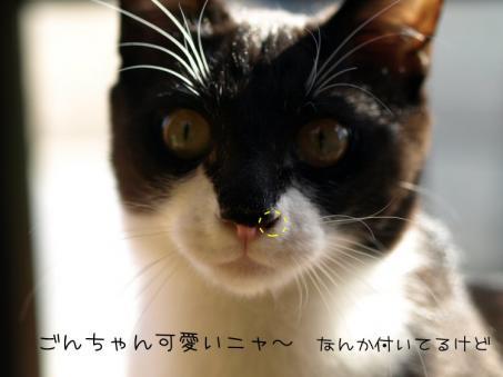 鼻クソだぁ~(^▽^;)