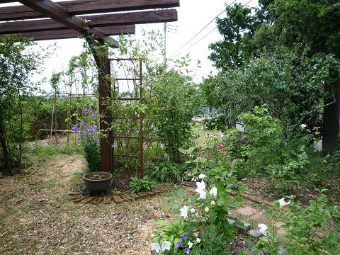 よんたの庭