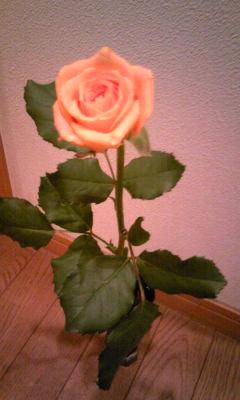 彼がくれたバラ