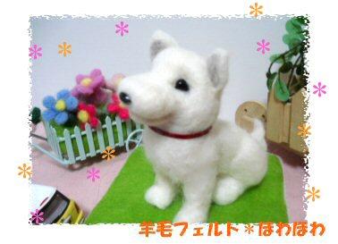 hokkaido dog3