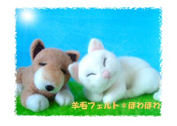 sleeping dogcat2