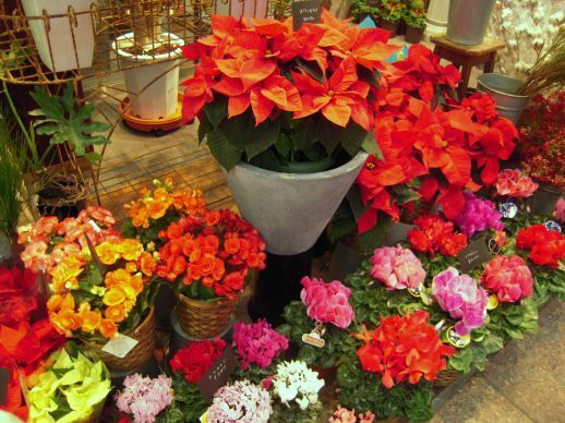 flower shop1