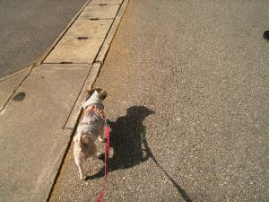 やっぱり歩きます