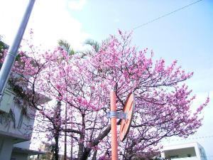 椰子の木&桜
