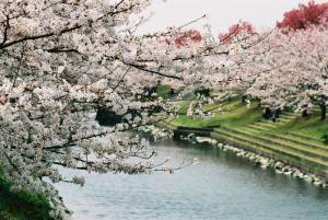 5赤坂泉 2005.04.080001