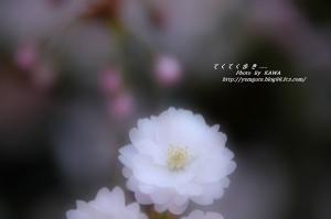 7DSC_59800001.jpg