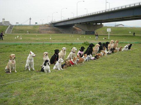 完走犬 記念撮影