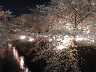 目黒川の夜さくら