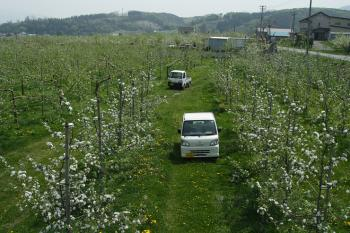 原ケ平りんご生産組合のりんご園