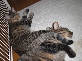 cat-shippoerimaki.jpg