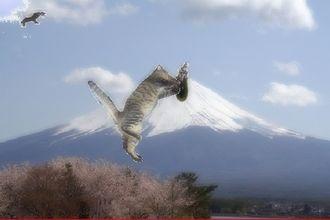 hatuyume_20100105000814.jpg