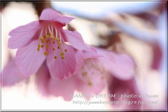 IMG_8049-1.jpg