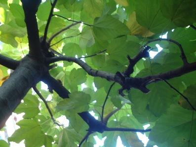 木漏れ日♪blog用