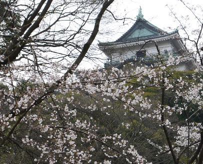 和歌山城♪(by父)