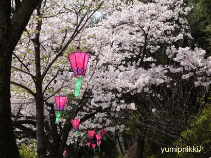 K公園にてお花見♪