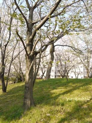 お花見090407絡まった桜